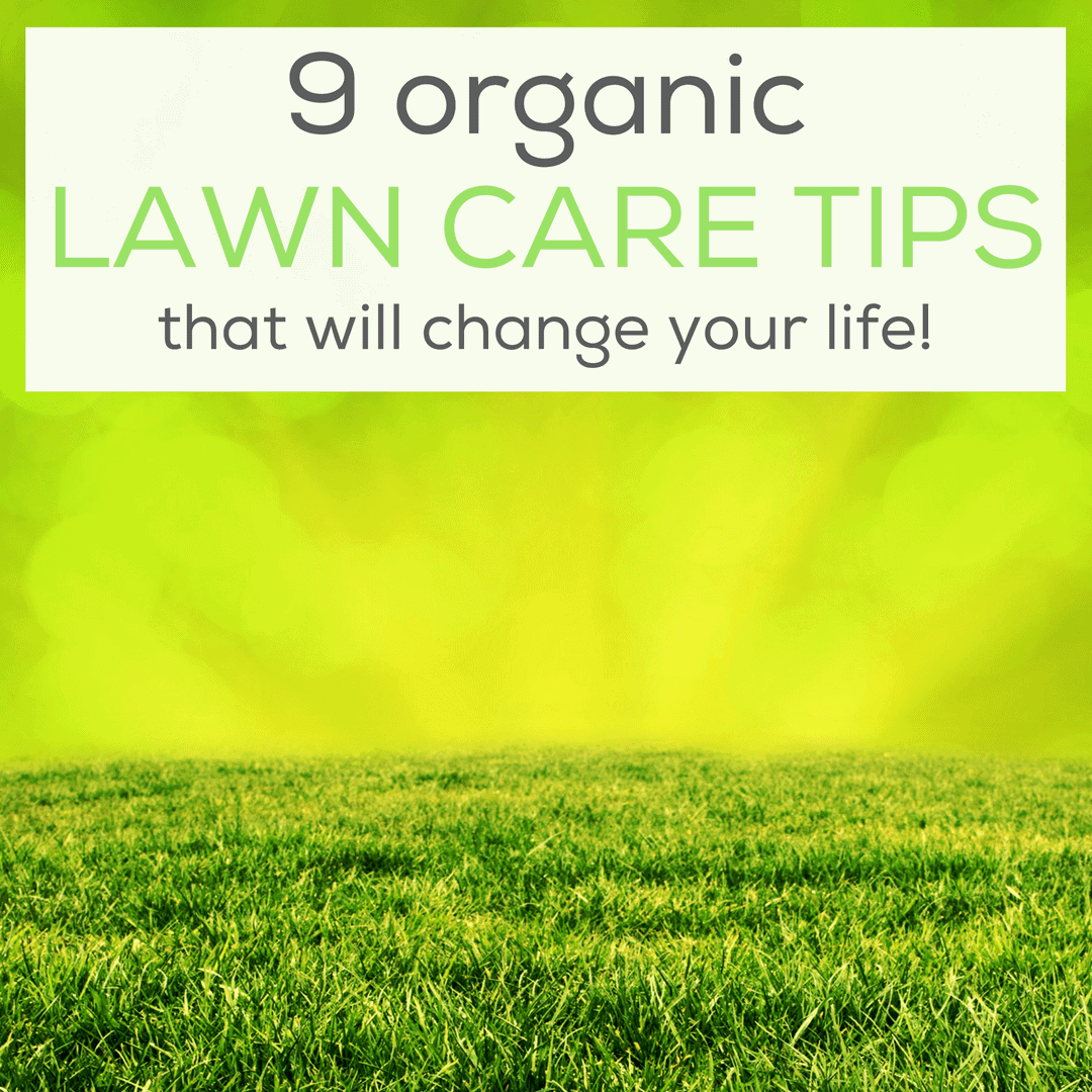 Catchy Collections of Lawn Care Tips - Catchy Homes Interior