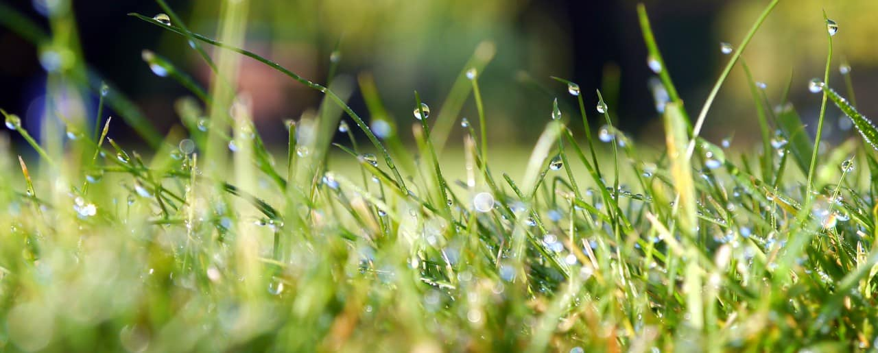 omaha lawn watering tips  paradise lawns, Natural flower