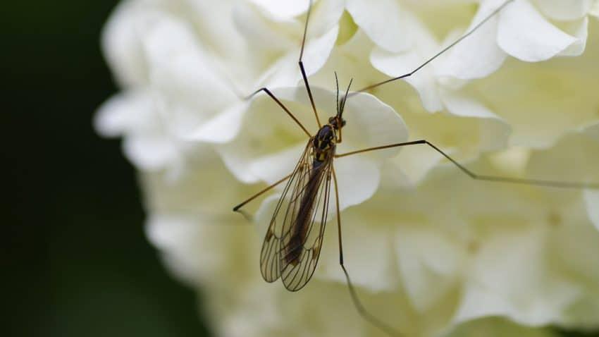 Nebraska mosquitos