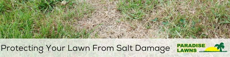 protect lawn from salt damage