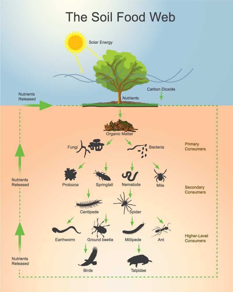 omaha soil food web