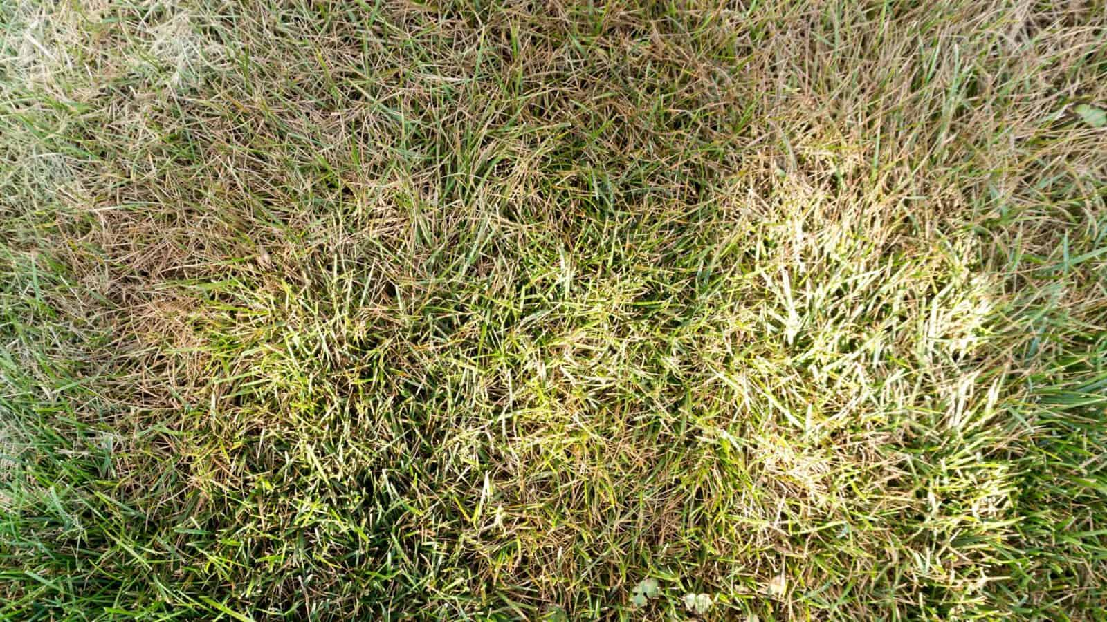 nebraska turf grass help