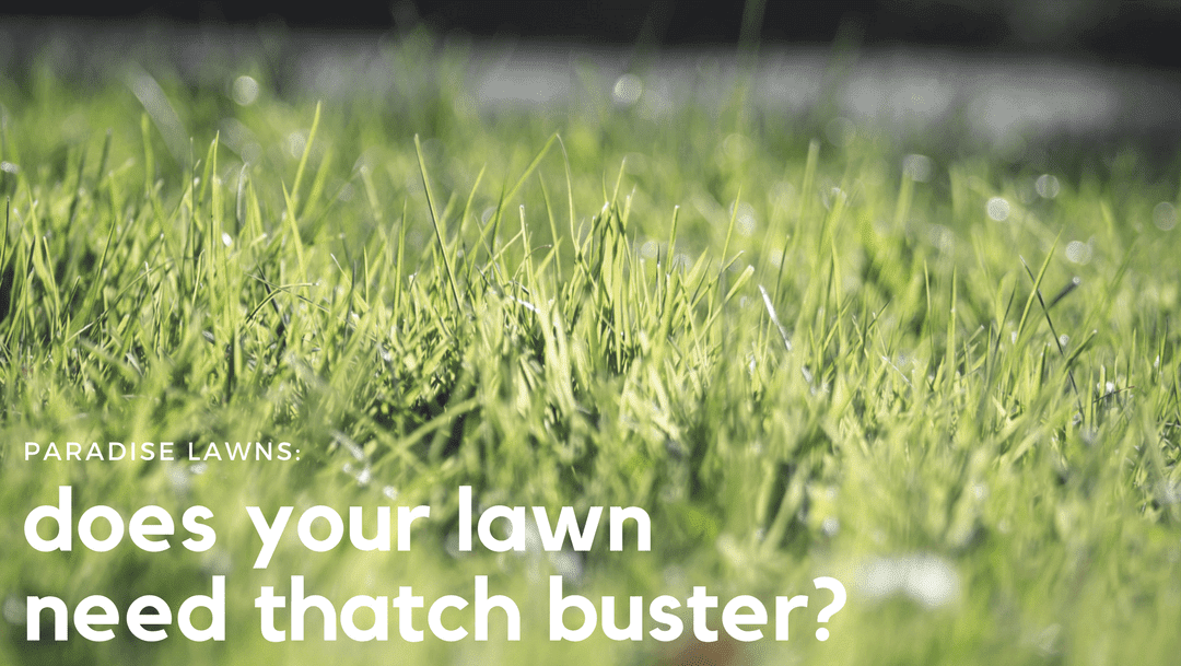 Does your lawn need Thatch Buster?