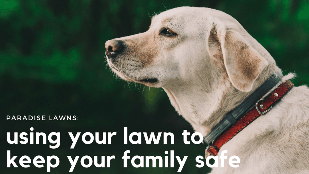 ant, flea, and tick prevention, omaha lawn care