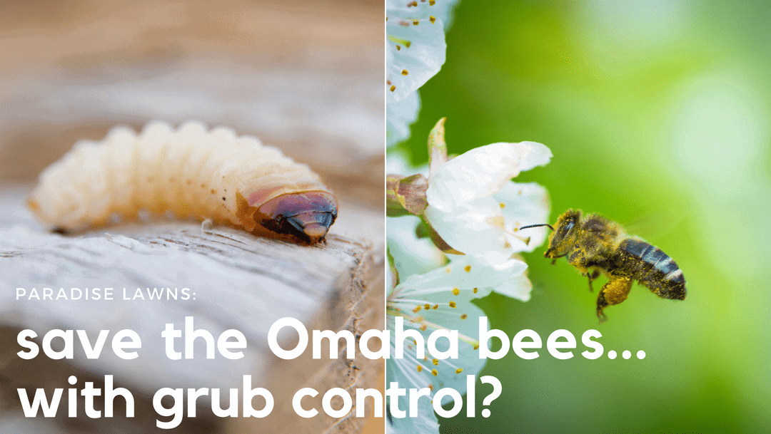 save the omaha bees with grub control