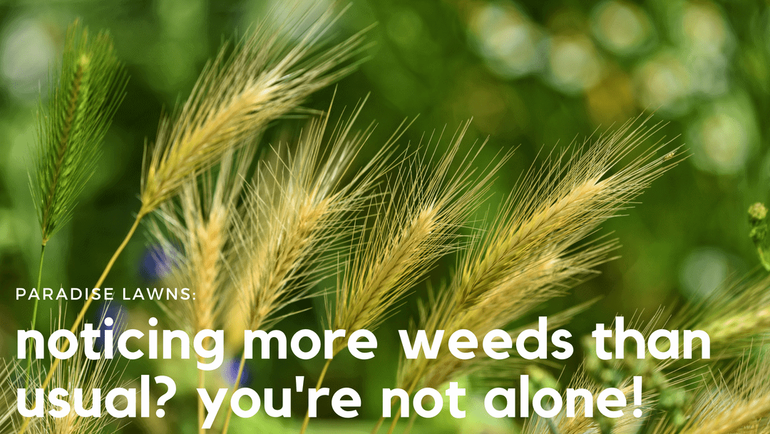 Noticing more weeds than usual? You're not alone!