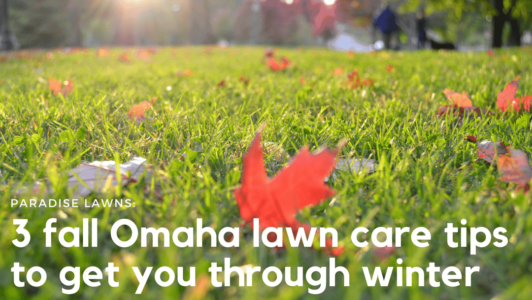 3 Omaha lawn care tips to do this fall to help your lawn through winter