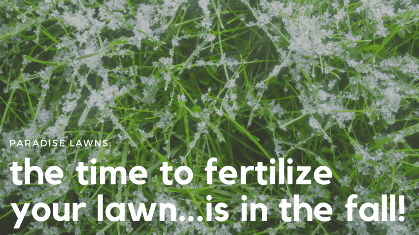 omaha lawn fertilization company