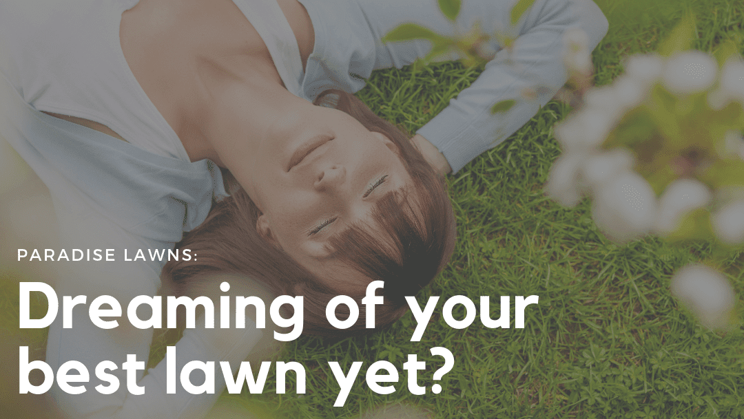 Dreaming of your best lawn yet?