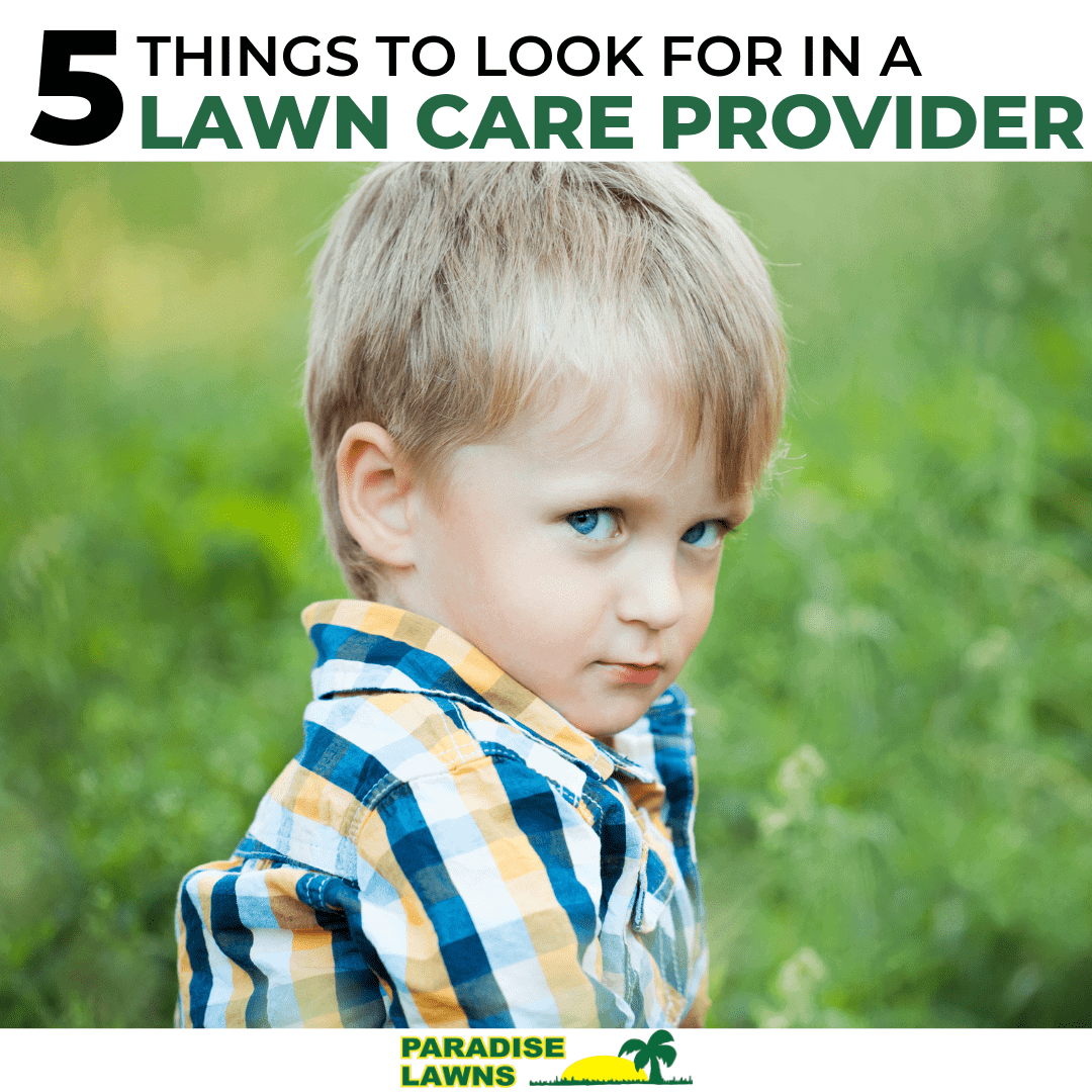 what to look for in a lawn care company