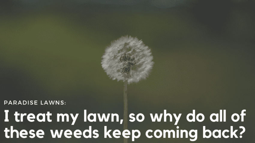 omaha lawn care