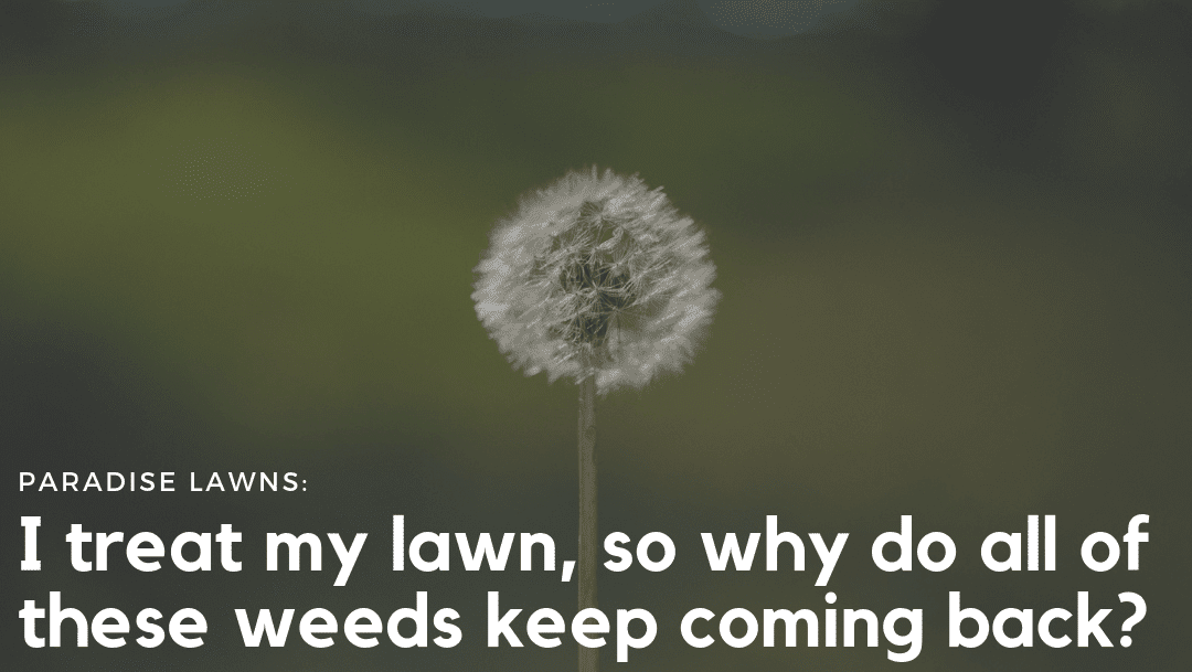 I treat my own lawn, so why do these weeds keep coming back?