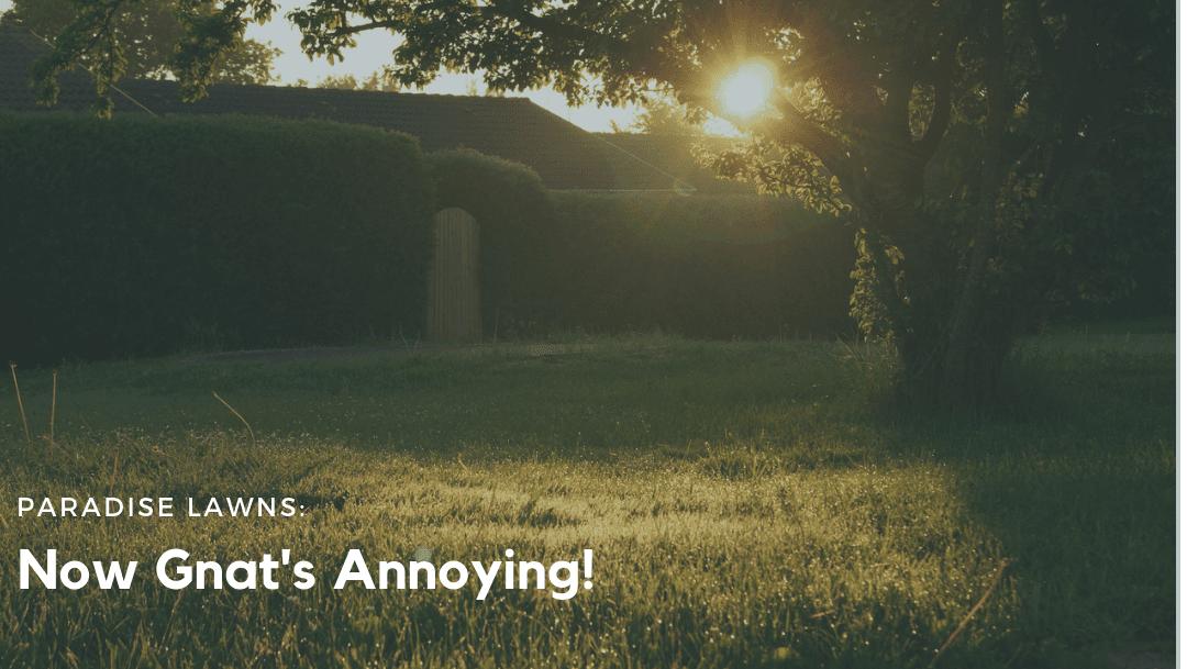 Now Gnat's Annoying!