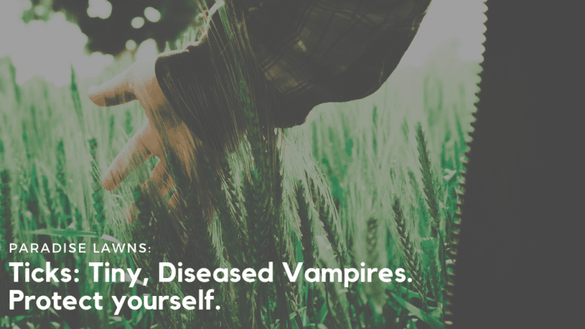 "Woman running her hands through tall grass in an open field with Paradise Lawns' blog title ""Ticks: Tiny, Diseased Vampires. Protect yourself!"" on it."