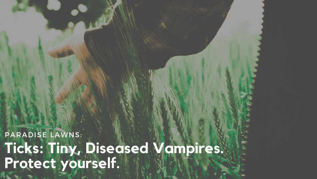"""Woman running her hands through tall grass in an open field with Paradise Lawns' blog title """"Ticks: Tiny, Diseased Vampires. Protect yourself!"""" on it."""