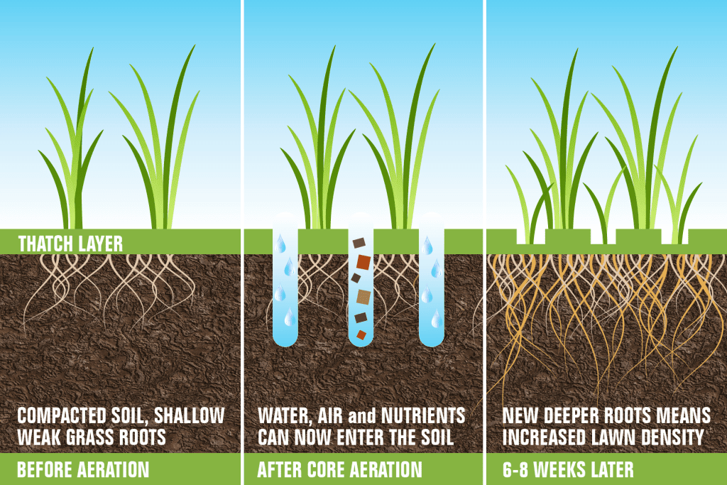 Infographic drawing explaining aeration and overseeding