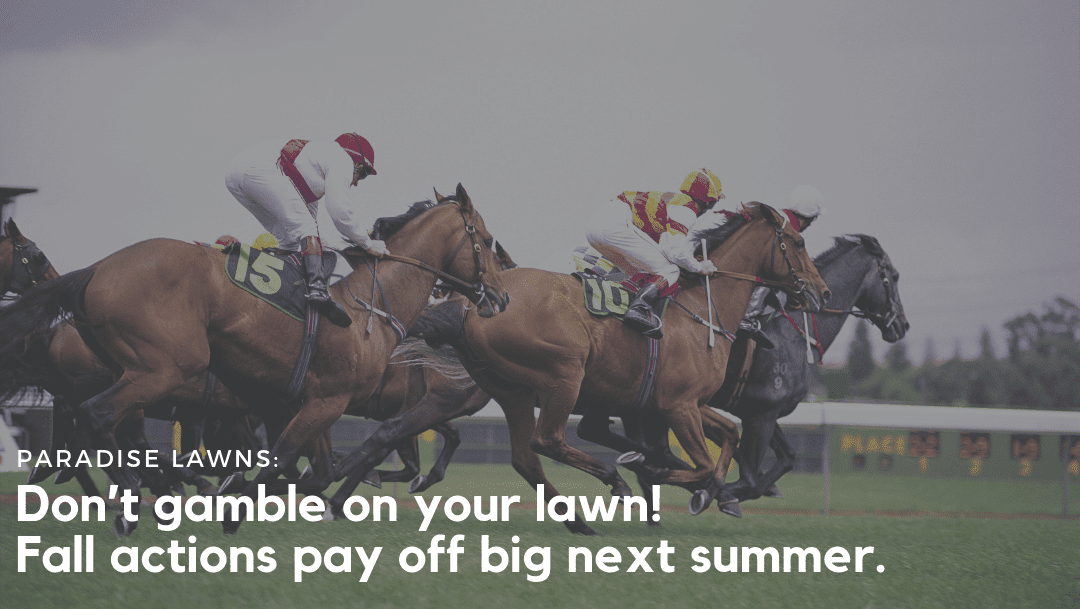 Fall actions pay off big next summer for your lawn.