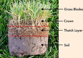Image showing layers of grass, thatch and soil