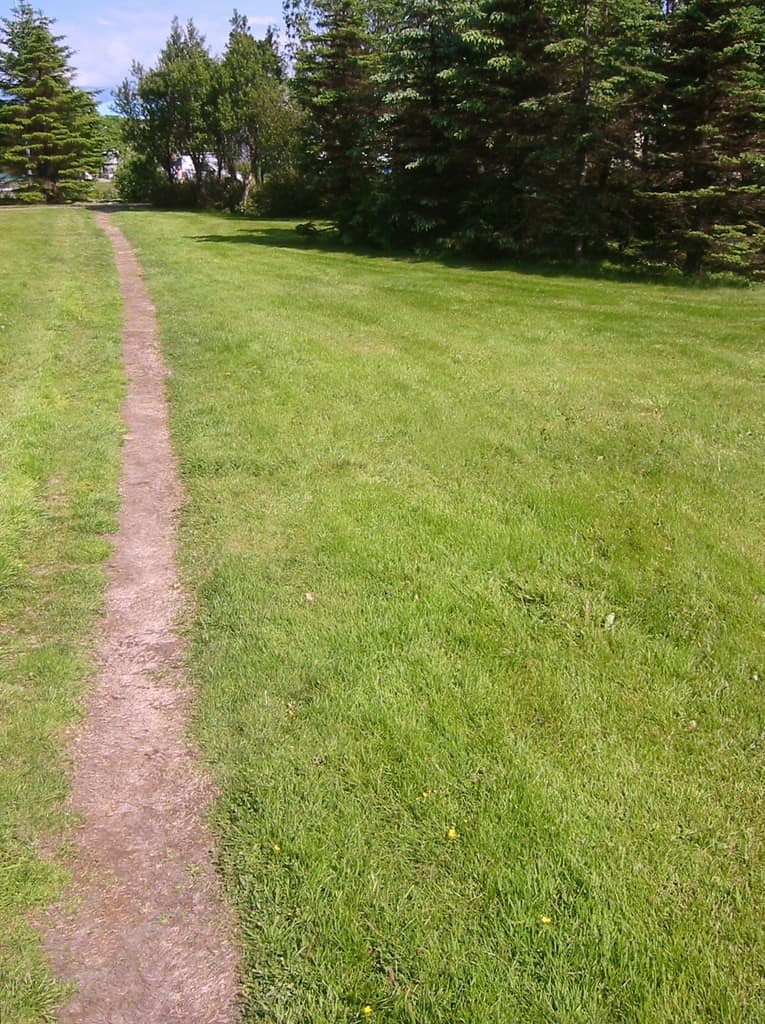 Worn Path through Grass