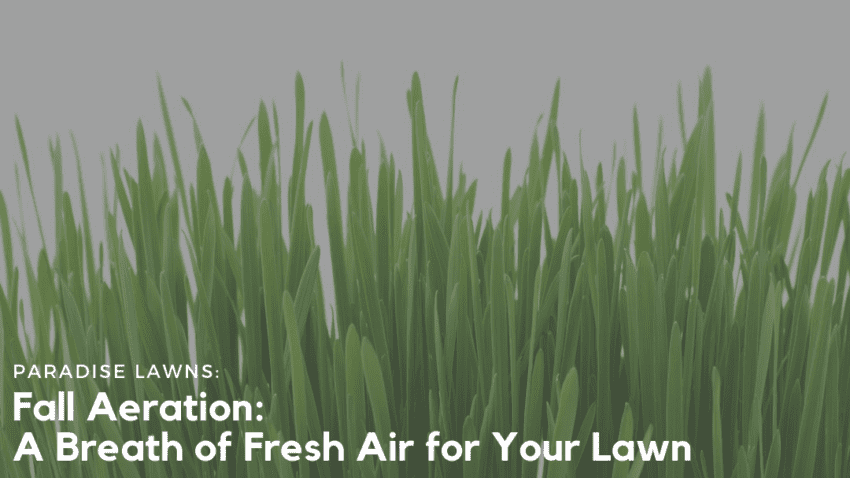 Fall Aeration: a breath of fresh air for your lawn