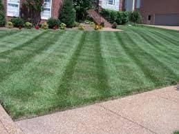 Your lawn can look great by spring