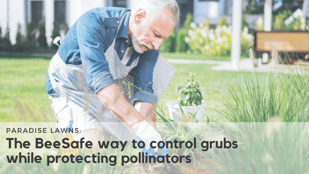 control grubs while protecting pollinators