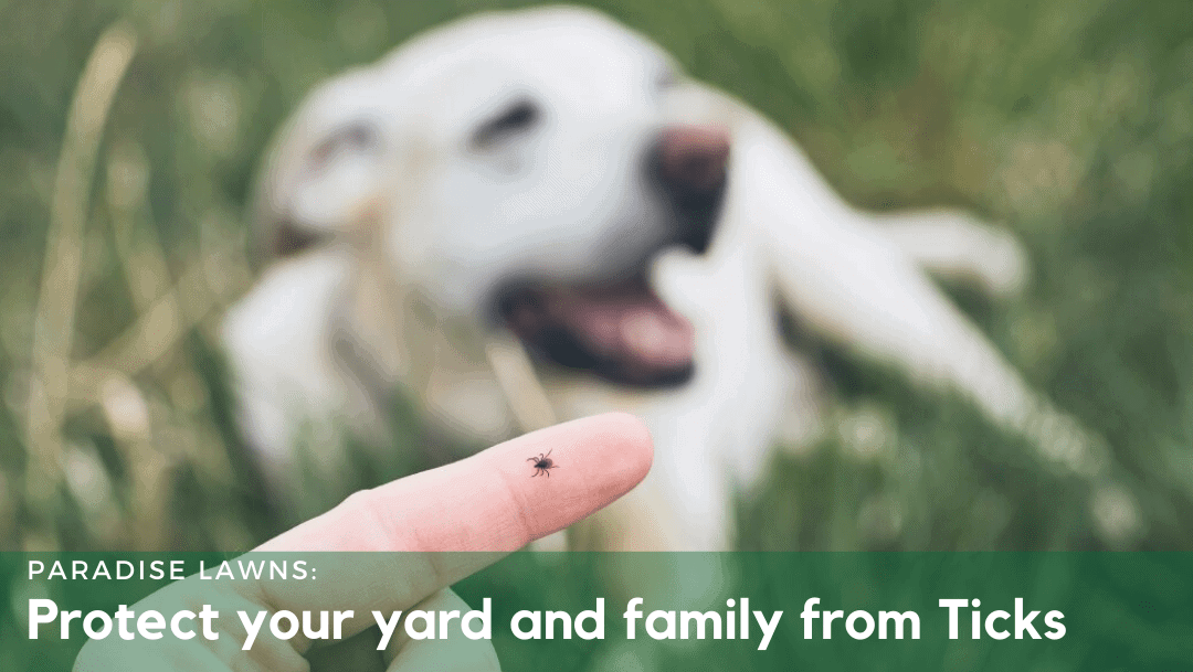 Protect your yard and family from Ticks