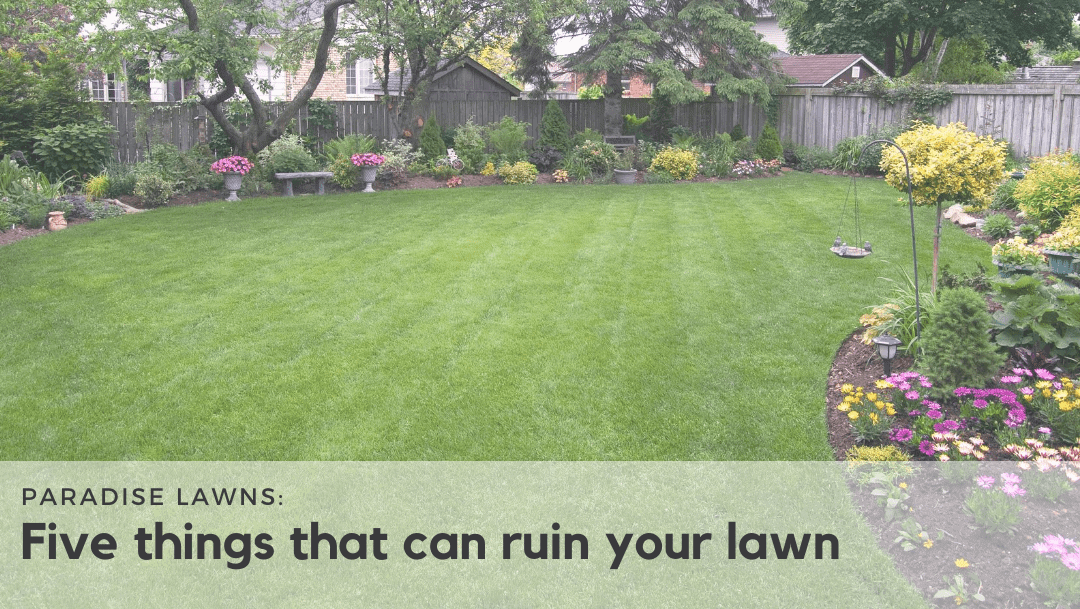 Five lawn care issues that can ruin your yard