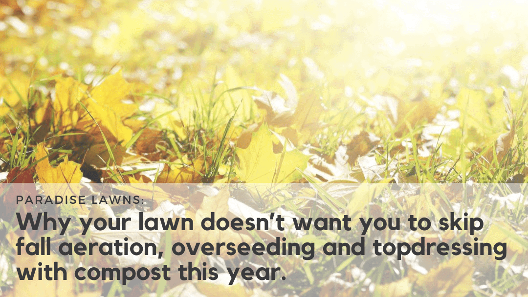 Why you don't want to skip fall lawn care this year
